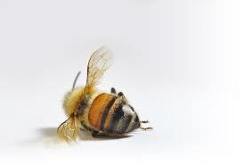 Ev yapımı, doğaya zarar vermeyen böcek ilaçları nasıl yapılır?
