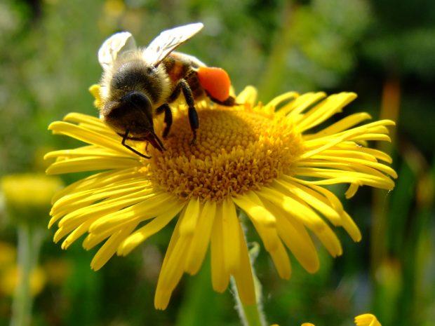 Arılar için arı gibi çalışıyoruz