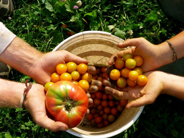 Tohum pazarında aktörler değişti ama… Gerçek gıdaya giden yol değişmedi!