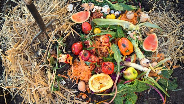 Organik çöpler değerleniyor!