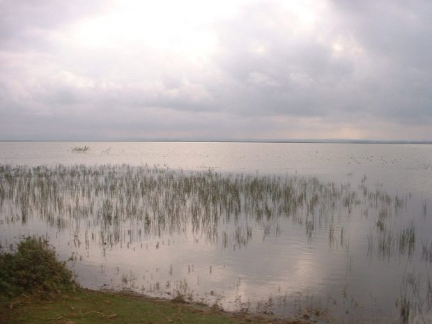 Ekolojik Tarım Sulak Alanları da Koruyor