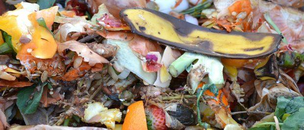 Toprağın gıdası: Organik atıklar