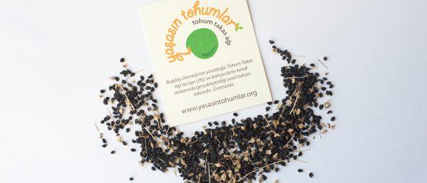 Yerli/atalık tohum neden önemli?
