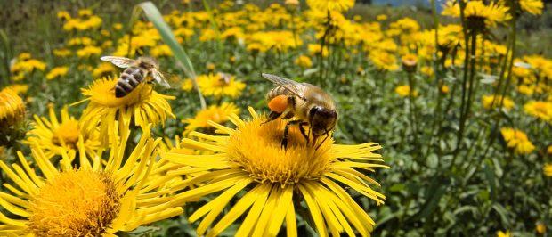 Arıları Yaşatmak için Fethiye'deyiz