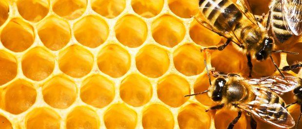 Arıları yaşatmak için ne yapabiliriz?