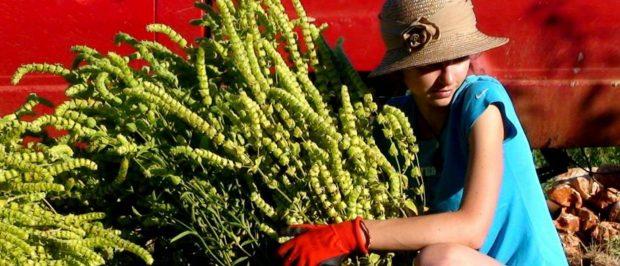 Ekolojik tarıma destek olmak için ne yapabiliriz?