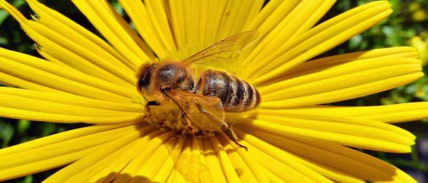 Neonikotinoid arıları öldürüyor; kullanımı yasaklansın, denetimler artırılsın!