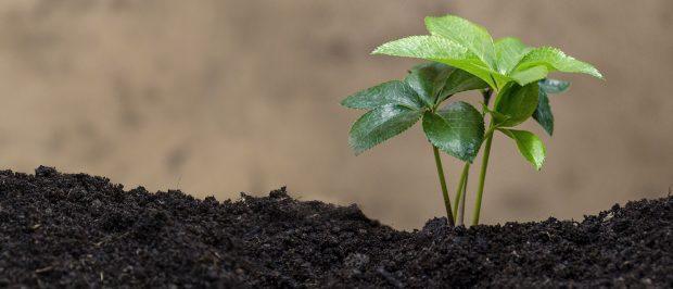 Ekolojik dönüşüm başladı; katılmak ister misin?