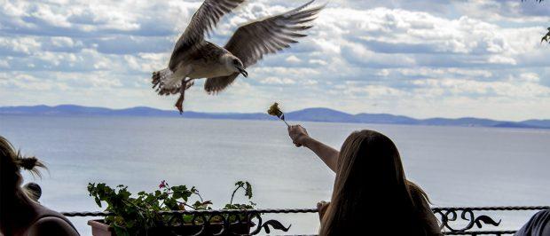 Neotikotinoidlerin kuşlar için de zararlı olduğu ortaya çıktı