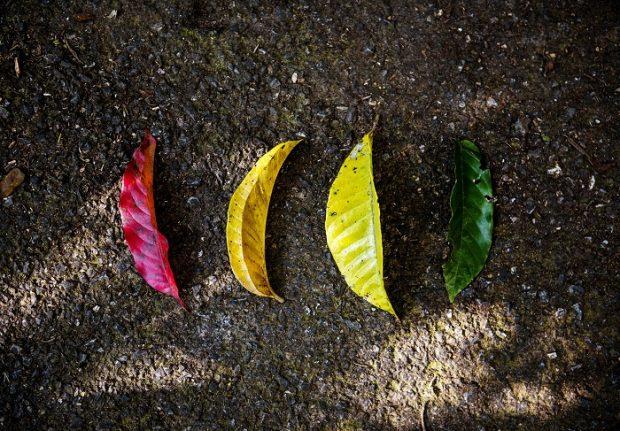 Buğday'dan ekolojik yaşam bilgisini paylaşan 10 web sitesi