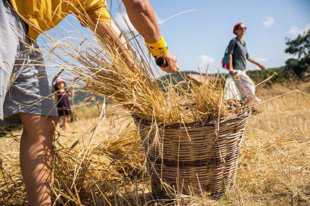 Organik tarımı geliştirmek için Brüksel'de gönüllü olarak çalışmak ister misiniz?