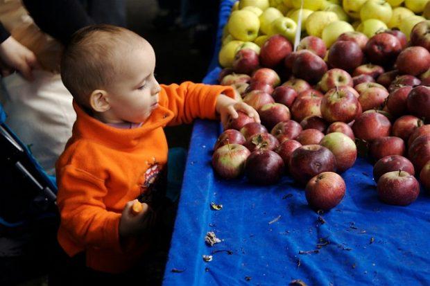 Gıda Güvenliği Yazı Dizisi