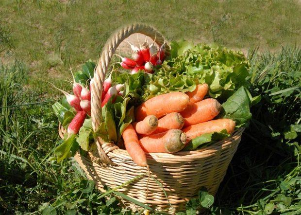 STK'lardan Ortak Açıklama: Kazık değil, güvenilir gıda!