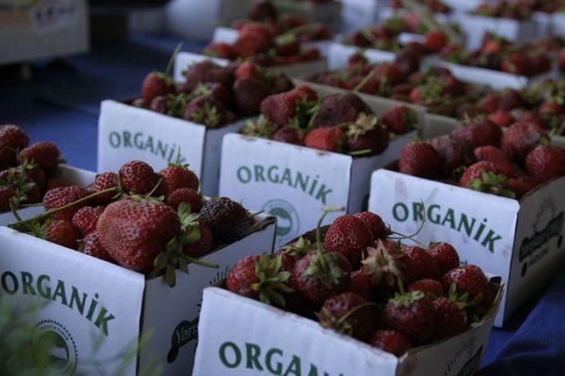 Bir hafta organik beslendiler, vücutlarındaki pestisit oranı azaldı!
