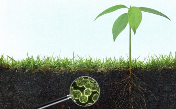 Toprağın kalitesi nasıl artırılır: Kompost, işlemesiz tarım, ekim nöbeti