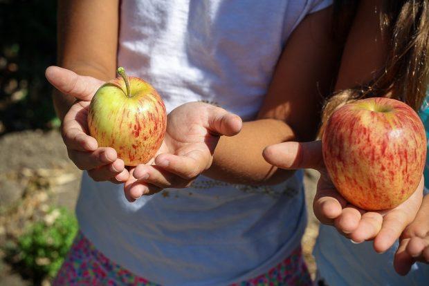 Gıda kalitesine bütüncül bir bakış