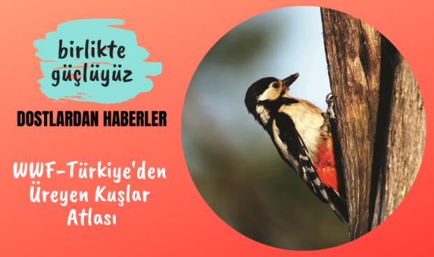 WWF-Türkiye'den Üreyen Kuşlar Atlası