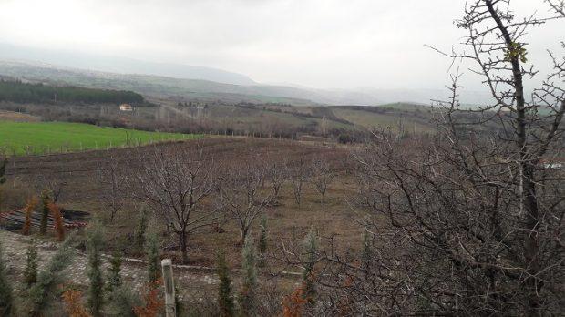 Buğday ve Dört Mevsim Derneği'nden yeni proje: Güdül'de Gıda Toplulukları ile Agroekolojik Dönüşüm