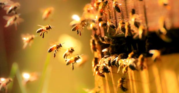 Bilim insanları uyarıyor: İklim krizi yaban arılarının neslini tehdit ediyor
