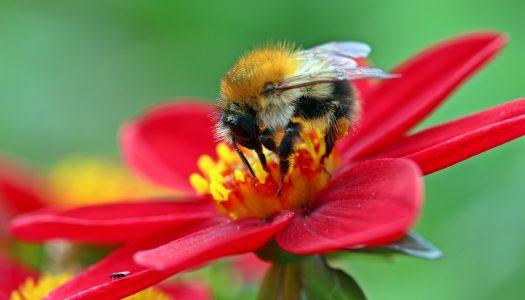 Arıları yaşatalım