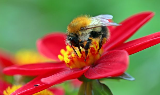 İngiltere'deki arı nüfusu da kırmızı alarm veriyor!