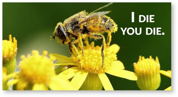 """""""Arı dostu"""" olduğu söylenen pestisitler de arıları öldürüyor!"""