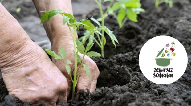 Ekolojik Tarımda Bitki Koruma Yöntemleri – 2