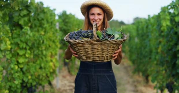 Organik Tarıma Giriş Eğitimi İstanbul'da Başlıyor!