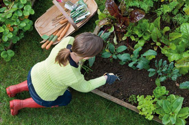 Bahçeciliğe Giriş ve Ekolojik Yaşamın Temelleri Eğitimi İstanbul'da!