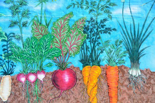 Mevsimsel Beslen – Ocak ayında hangi meyve ve sebzeler yetişir?