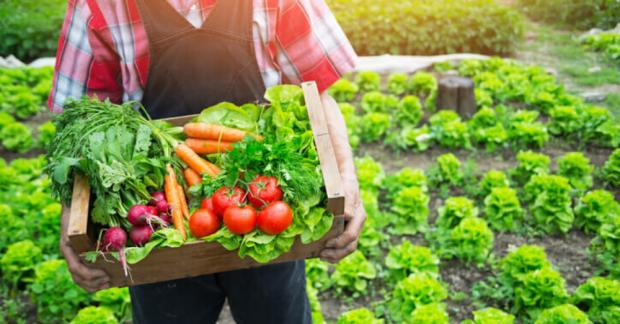 Organik Tarıma Giriş Eğitimi – 18/19 Ocak 2020