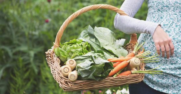 Mevsimsel Beslen – Şubat ayında hangi meyve ve sebzeler yetişir?