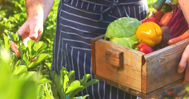 Bahçeciliğe Giriş ve Ekolojik Yaşamın Temelleri Eğitimi – 8 Şubat 2020