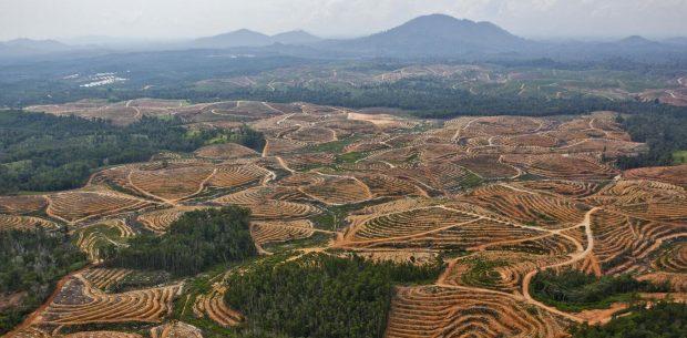 Gıda endüstrisi habitat kaybına sebep oluyor