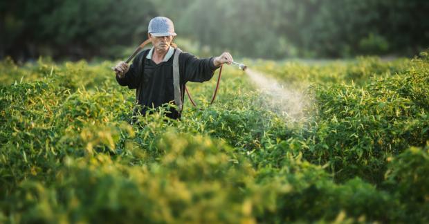 Pestisitler en çok çiftçilere ve tarım işçilerine zarar veriyor