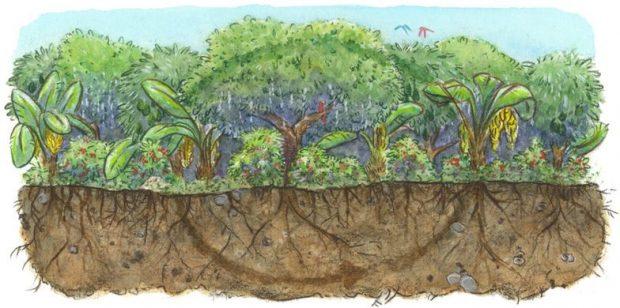 Ekosistem sağlığı için onarıcı tarım