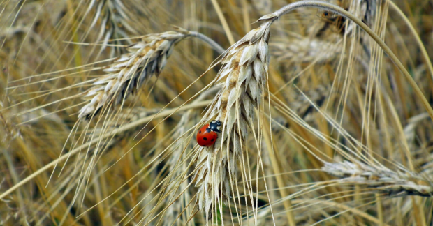 Böceklerin olmadığı bir dünyada bizi neler bekliyor?