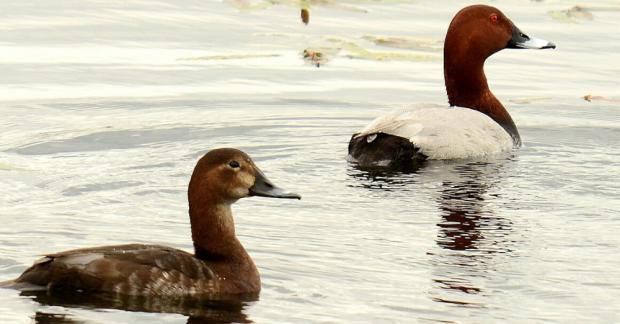 Doğa severlerden çağrı: Nesli tehlike altındaki kuşlar vurulmasın!