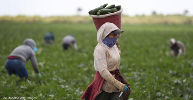 Küçük çiftçi üretiyor ama tüketiciye ulaştıramıyor