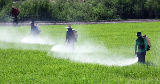 13 tehlikeli tarım zehrinin neden sadece 4 tanesi yasaklandı?