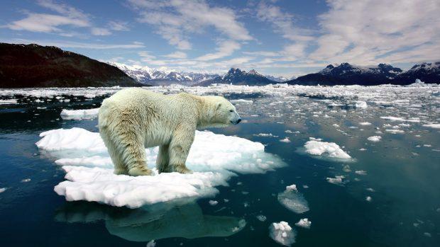 Son Buzul Erimeden