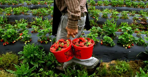 Organik üretim krizlere rağmen büyüyor