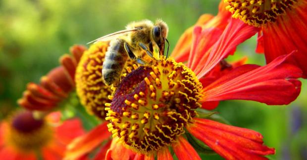 Türkiye'de arılara en çok zarar veren pestisitlerle ilgili bir kara liste – Bülent Şık