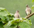 Tehlike altındaki kuşlara ölüm kararı
