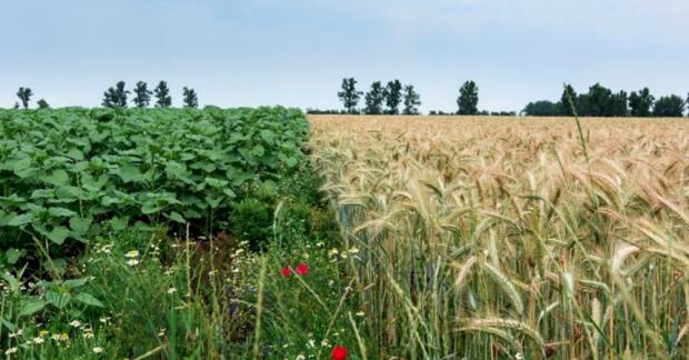 İklim krizi kadar varoluşsal bir tehdit: Biyoçeşitlilik kaybı ve gıda üretimi