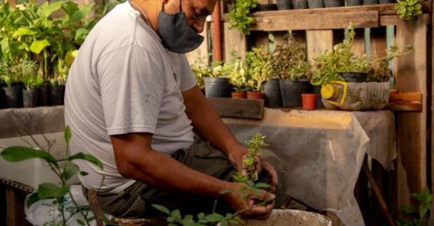 Arjantin'de kentsel tarım mücadelesi