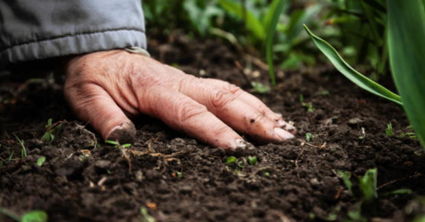 İnsan sağlığı toprak sağlığına bağlıdır – Bülent Şık