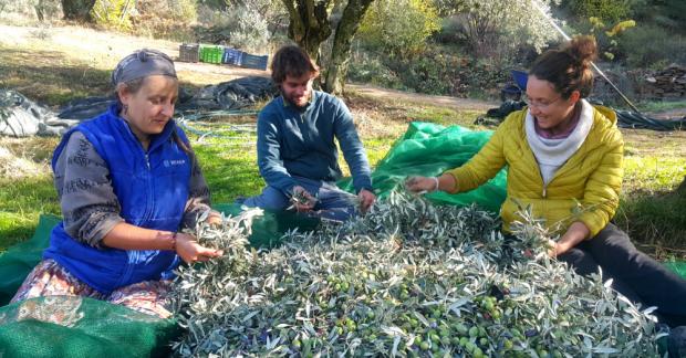 TaTuTa/WWOOF Türkiye Ekolojik Çiftlikleri: Gağgı Çiftliği
