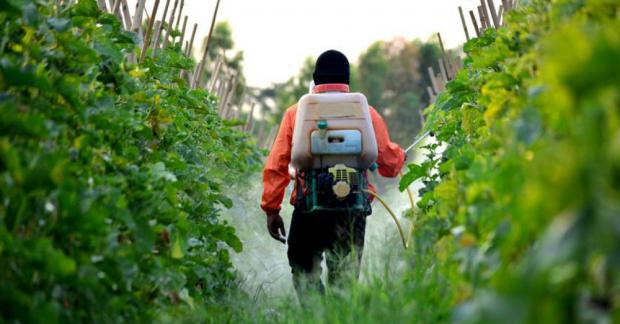 Pestisit zehirlenmeleri artıyor
