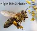 Arıları öldüren pestisitlerin kullanım süresi uzatıldı